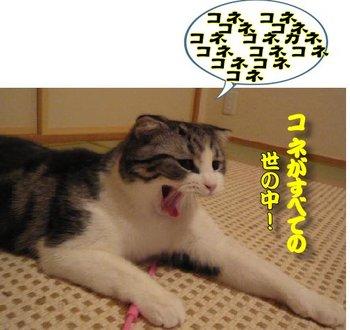 20120829_niseitarento_07.jpg